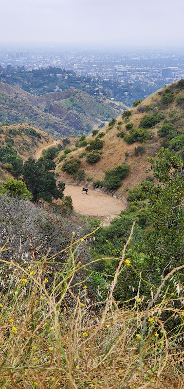 Hollywood Sign The Canyon Drive Trail의 사진